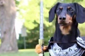 Nomes inspirados em séries de TV para cães