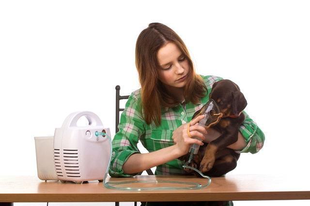 O que é a doença tosse de canis e como tratar
