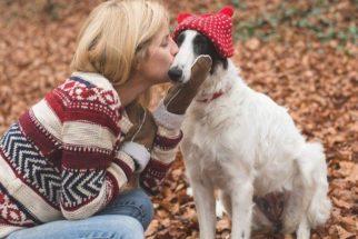 País é o primeiro no mundo sem cachorros abandonados