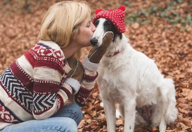 pais-e-o-primeiro-no-mundo-sem-cachorros-abandonados