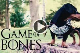 Paródia transforma cão em personagens da série de TV Game of Thrones
