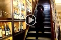 Poodle sobe escada em duas patas em tempo recorde