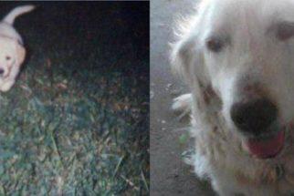 Série mostra as primeiras e últimas fotos de cães tiradas por seus tutores