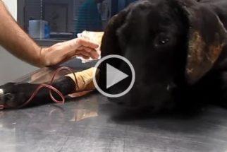 Quase morta devido perda de sangue, cadela se recupera e ganha nova vida
