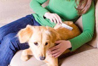 Saiba como escolher a escova ideal para usar no pelo do seu cão