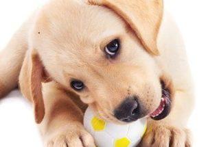 Saiba quais objetos podem ser perigosos para o seu pet