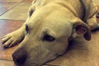 Tutora compartilha último dia de vida de cadela no Snapchat