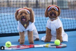 9 cães que também deveriam participar das Olimpíadas