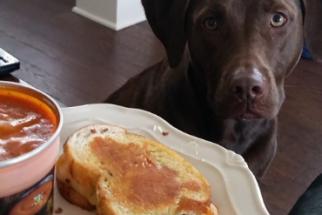 Descubra o que os cães pensam quando fazem cara de 'pidão'