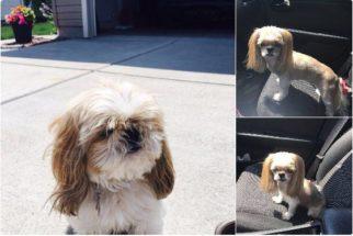 Para rir: cadela vira sensação no Twitter após tosa 'desastrosa'