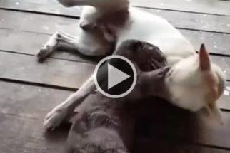 Cãozinho e lontra-marinha são amigos inseparáveis