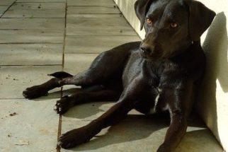 Animais pretos e deficientes são os que mais sobram na adoção