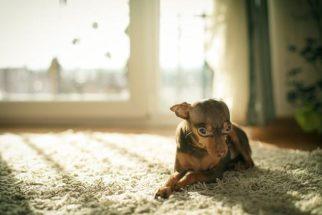 Bater em animais: tipo de repreensão que deve ser evitado