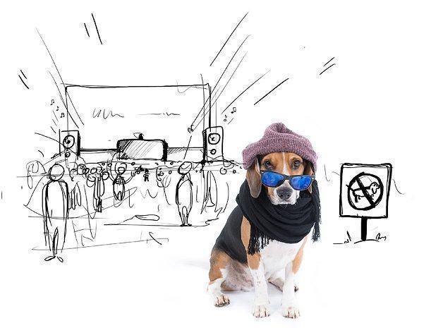beagle-juno-assistindo-show