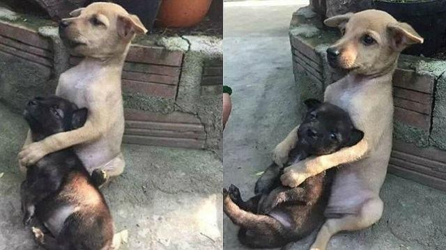 cães-abraçad-sem-templo-budista