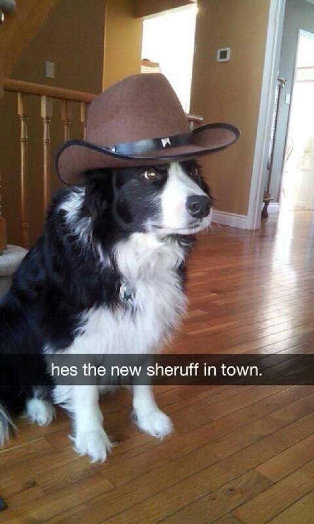 cachorro-com-chapeu-de-cowboy