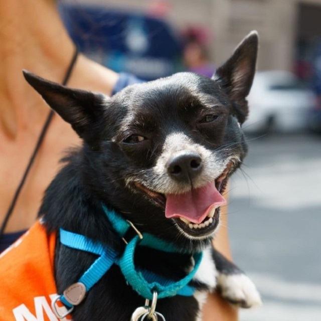 cachorro-com-sorriso-engraçado