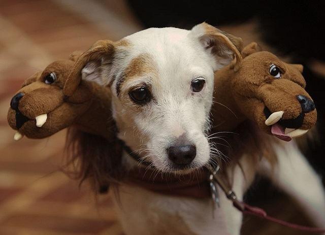cachorro-com-tres-cabeças