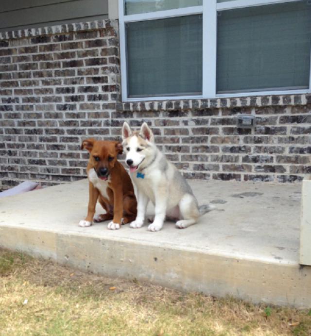 cachorro-contando-piada-para-seu-amigo