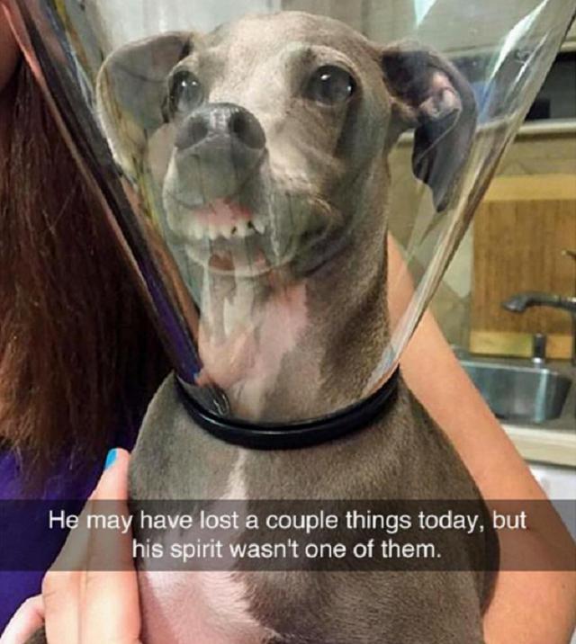 cachorro-fazendo-careta-dentro-de-colar-elizabetano