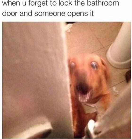 cachorro-foi-usar-o-banheiro-e-esqueceu-a-porta-aberta