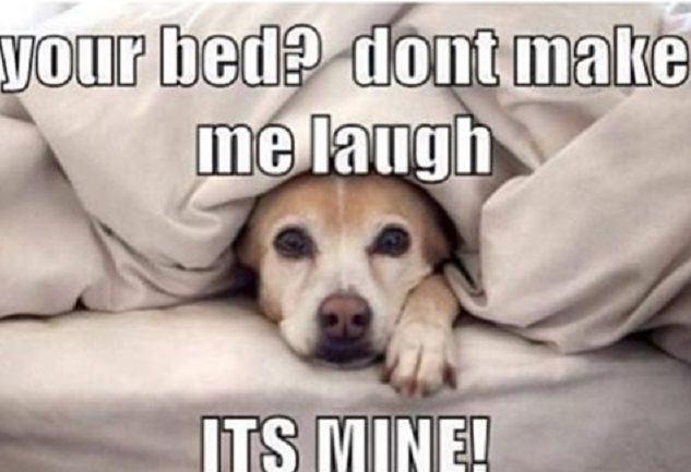 cachorro-roubando-cama-de-tutores