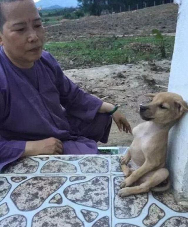 cachorro-sentado-como-se-estivesse-meditando