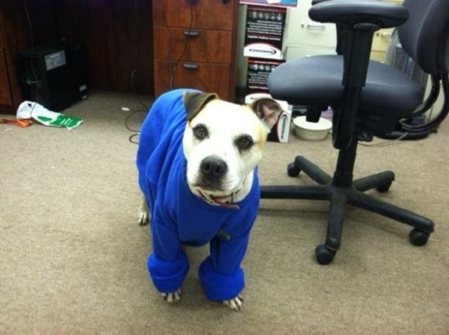 cachorro-vestido-inadequadamente