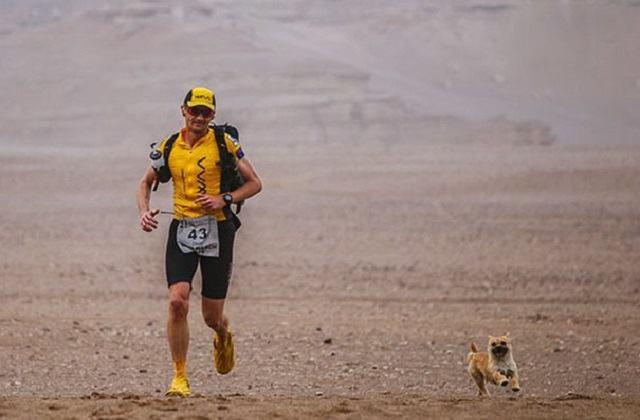 cadela-abandonada-se-junta-a-corredor-durante-maratona-na-china