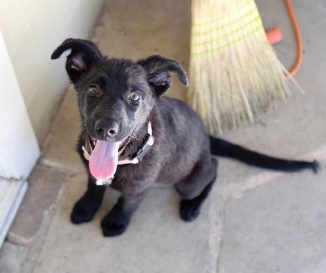 cadela-filhote-fofa-demais-para-nao-ser-adotada
