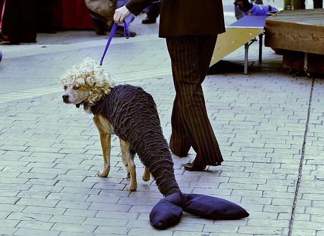 cadela-sereia