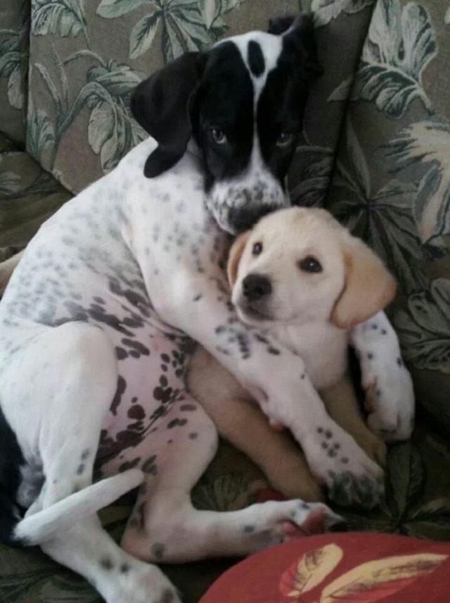 cadelinha-abraçando-filhote
