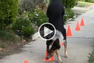 Cães adotados: além de fofos, talentosos