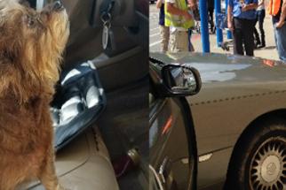 Cães causam acidente de carro em loja de conveniência