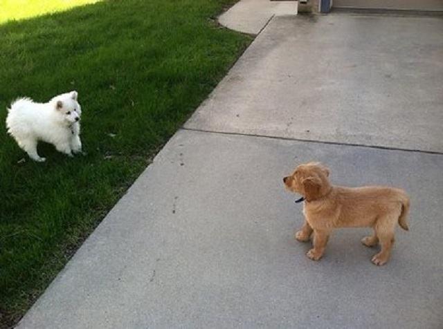 caes-se-tornaram-amigos-a-primeira-vista