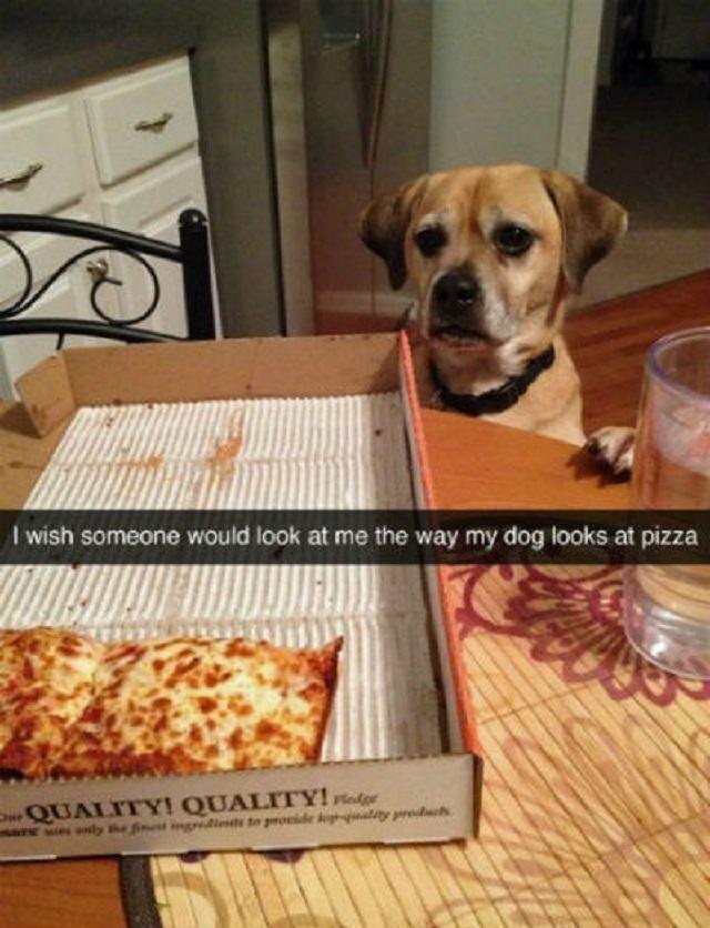 cao-com-olhar-apaixonado-para-pizza