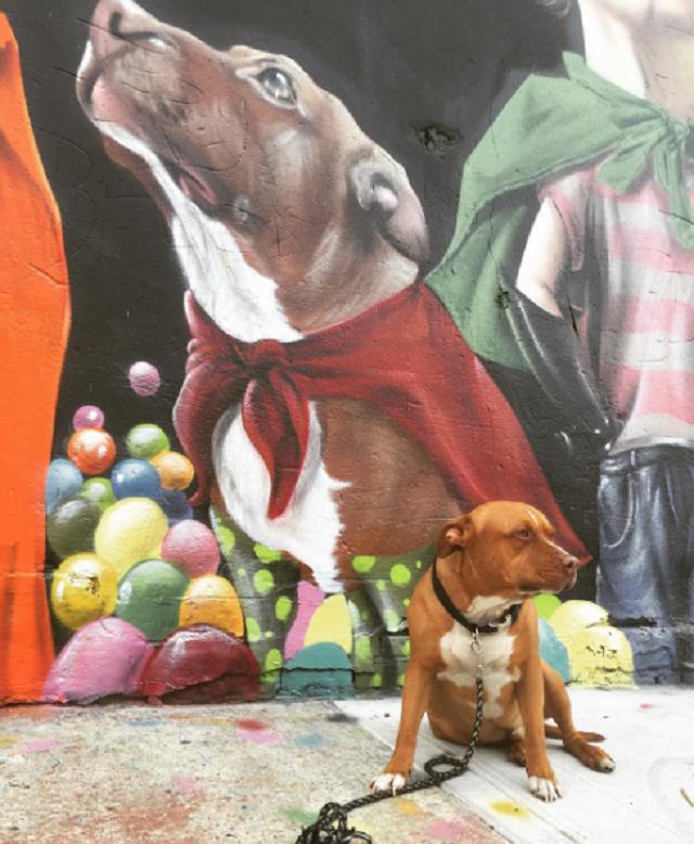 cao-com-pintura-em-muro