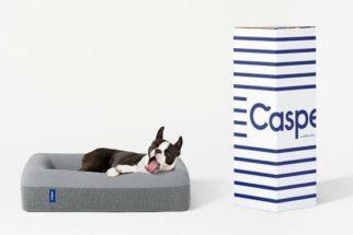 Empresa americana investe na fabricação de colchões pra cães