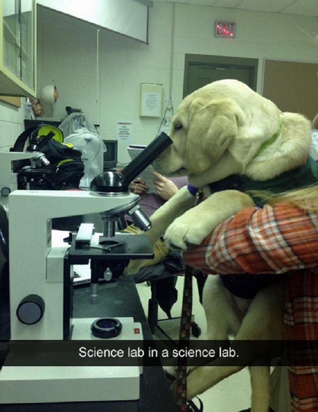 caozinho-cientista-olhando-atravez-de-microscopio