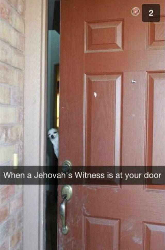 caozinho-espiando-atravez-de-porta