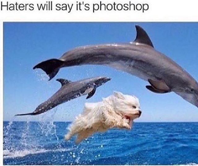 caozinho-saltando-junto-com-golfinhos
