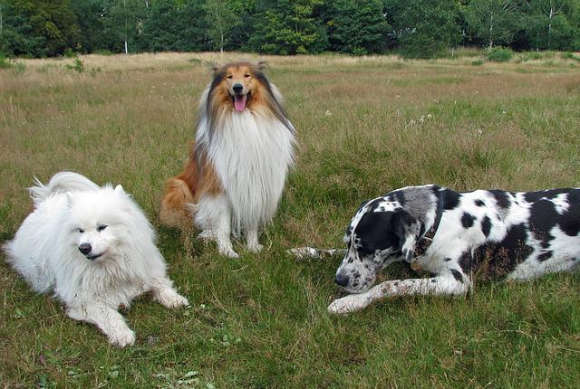 Como posso descobrir a raça do meu cachorro?