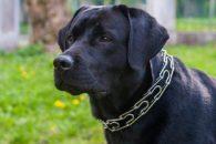 Raças de cães que combinam com cada signo do zodíaco