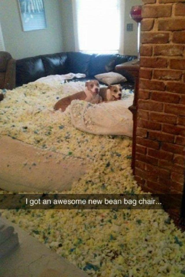 dupla-de-caes-destruiu-cadeira