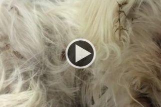 Encontrada quase morta, cadela tem recuperação incrível
