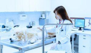 endoscopia-rinoscopia-laringoscopia-e-broncoscopia-para-caes