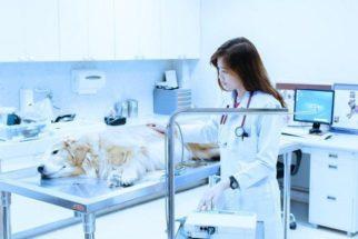 Endoscopia, rinoscopia, laringoscopia e broncoscopia para cães
