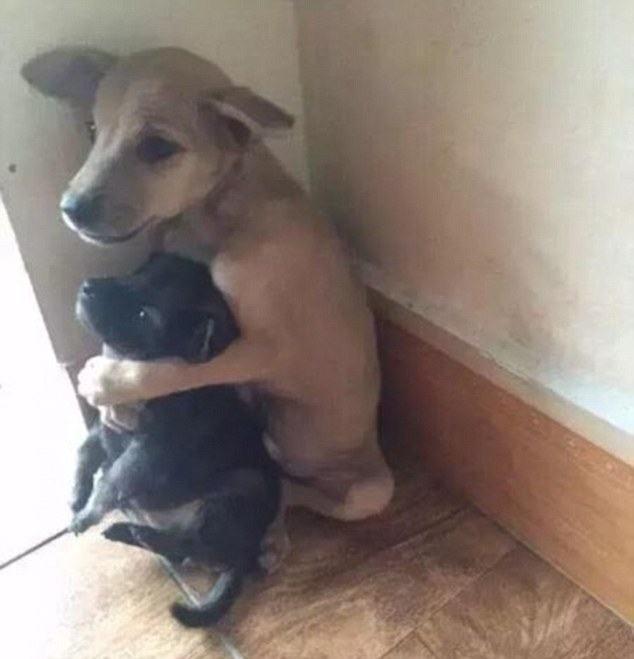 filhotes-nao-param-de-se-abraçar-apos-serem-adotados