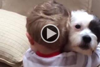 Garoto tem reação incrível quando seu cão idoso se nega a brincar