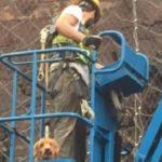 Cadela é resgatada de paredão com mais de 70 metros de altura